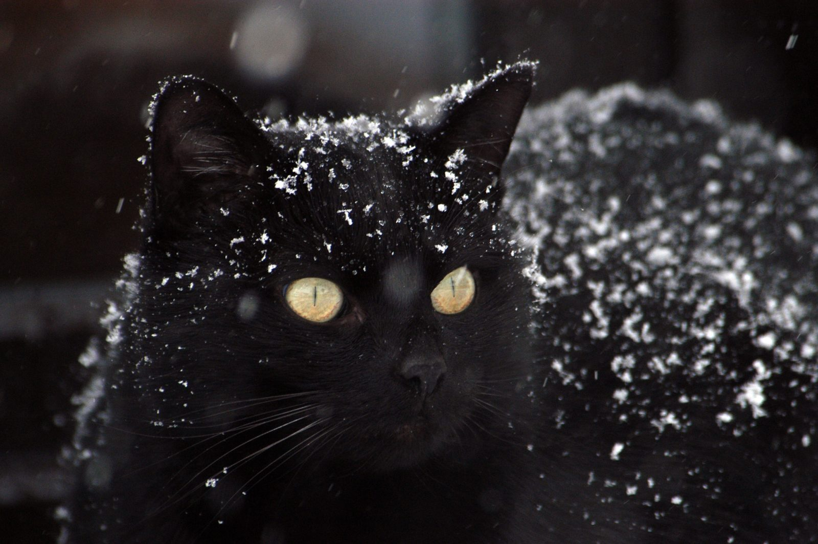 nomes para gatos pretos