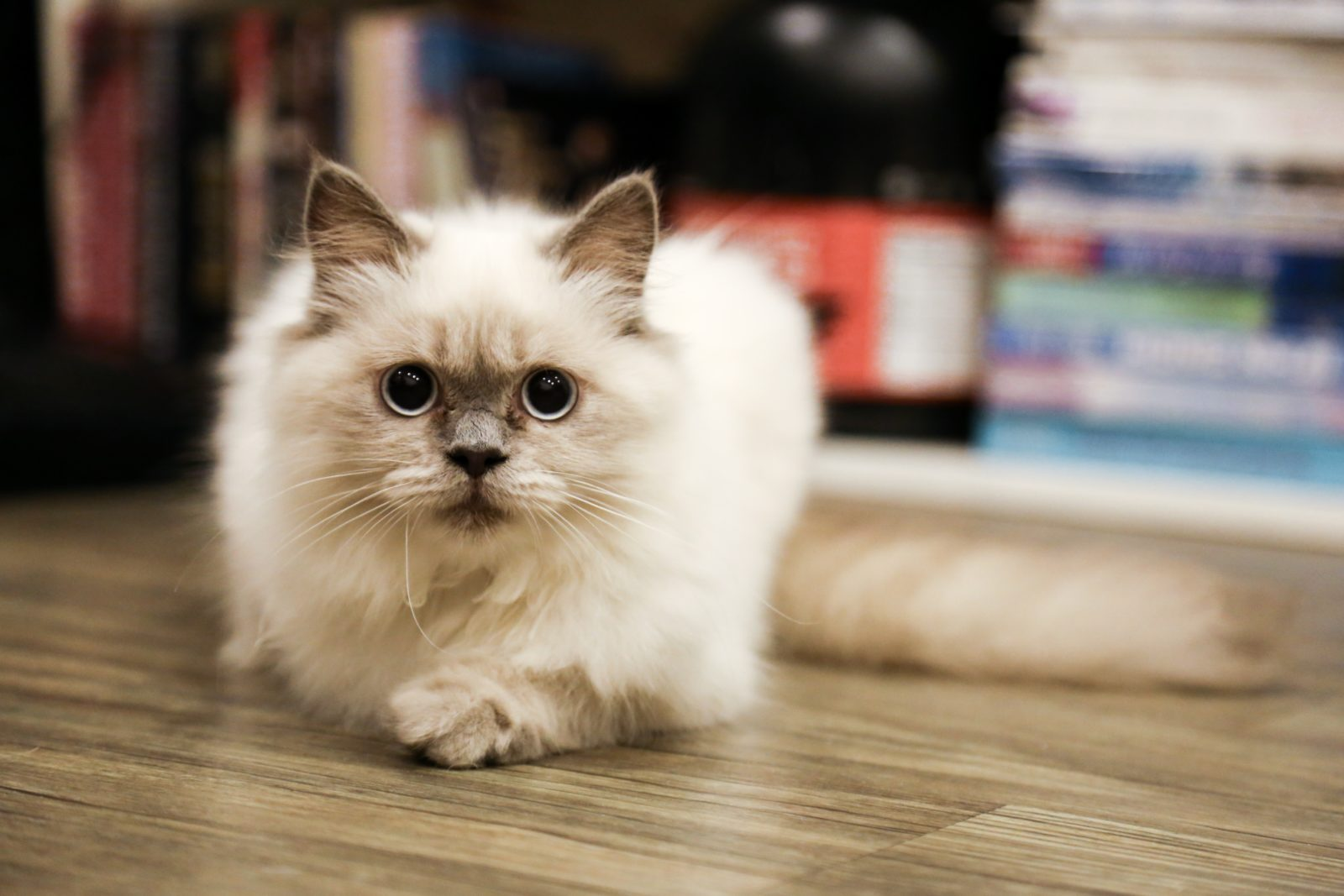 nomes para gatos brancos