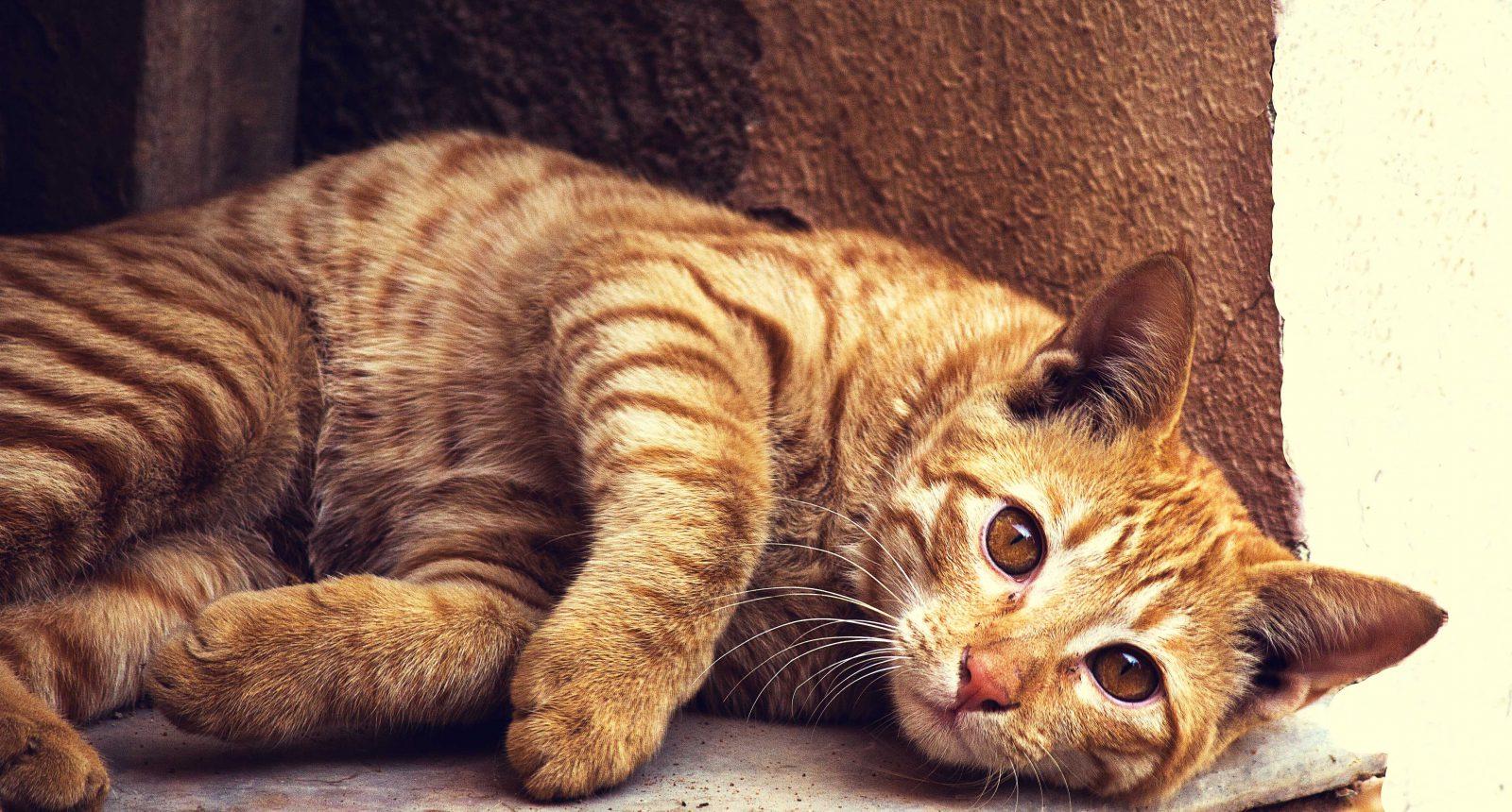 nomes para gatos fêmea