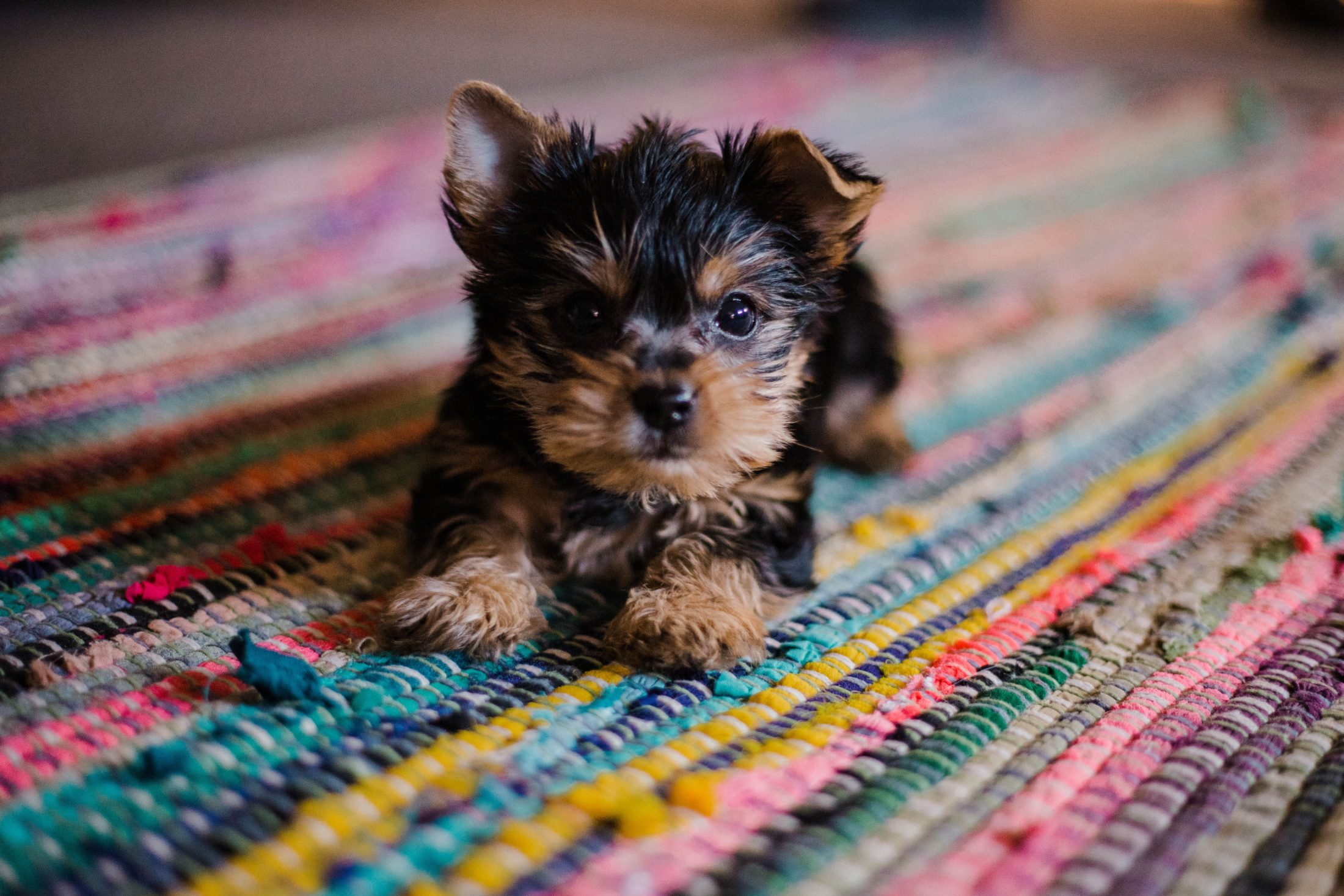 novo filhote no tapete