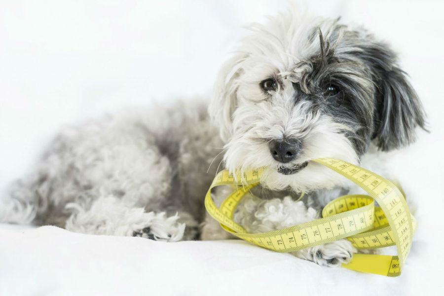 obesidade-canina-consequencias2