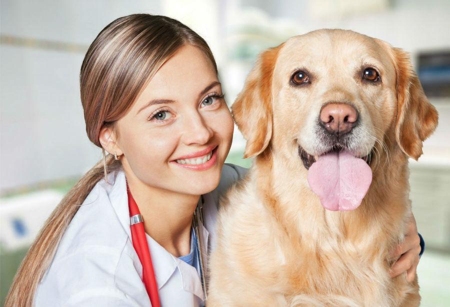 obesidade-canina-identificar3