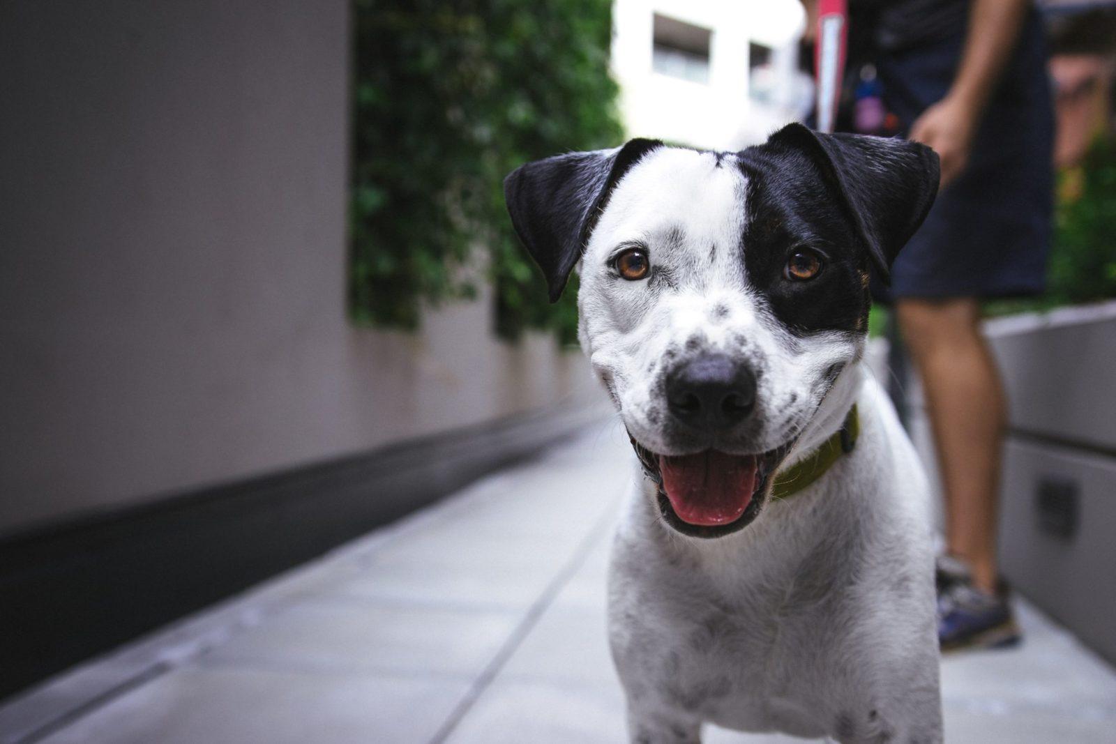Há muitas vantagens e desvantagens no serviço de passeio com cachorro.
