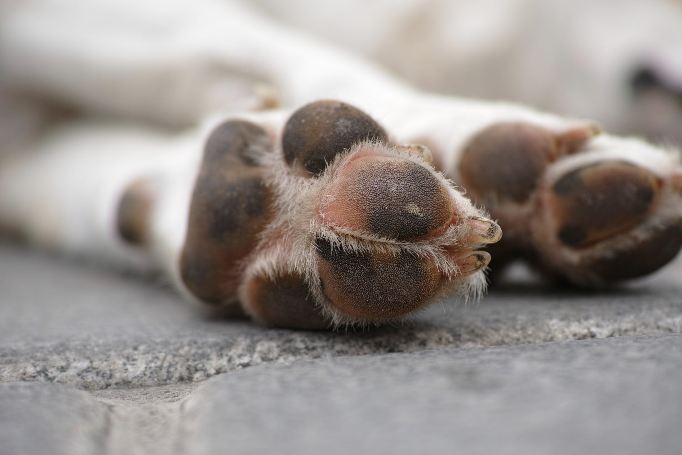 patas de cachorro