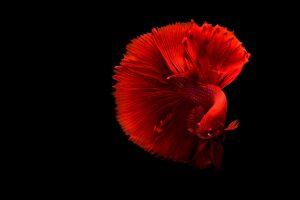 peixe feio