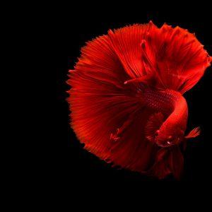 Peixe feio e estranho: os peixes ornamentais mais bizarros que existem