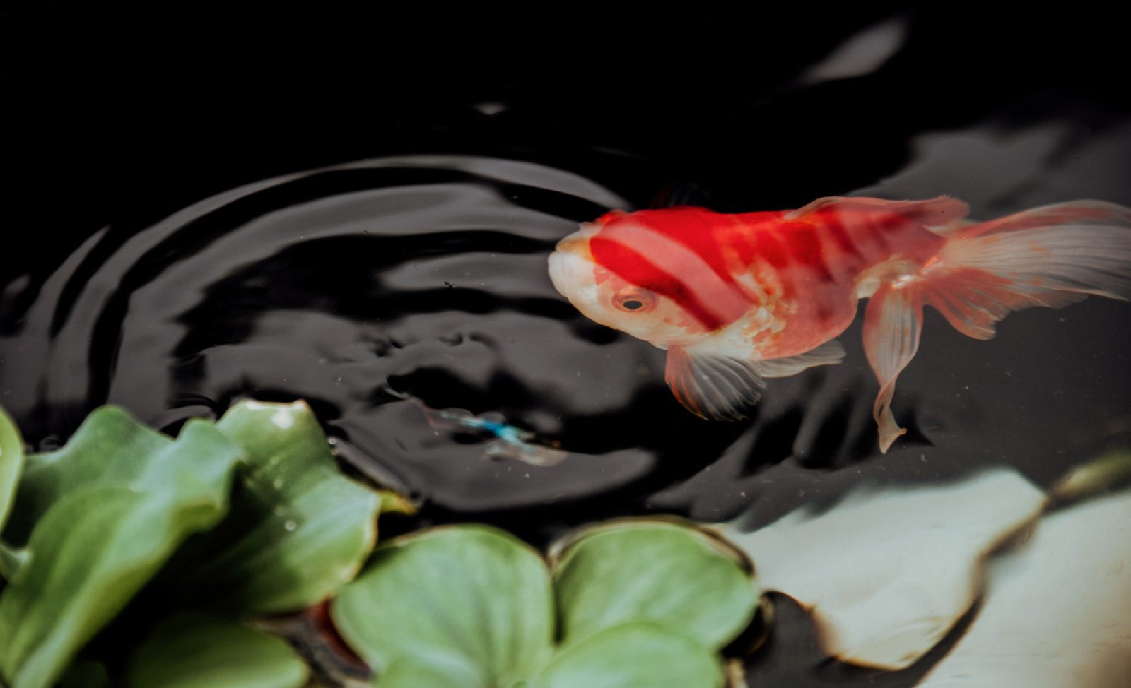 No aquarismo existem o aquário de peixes de água doce e de água salgada.