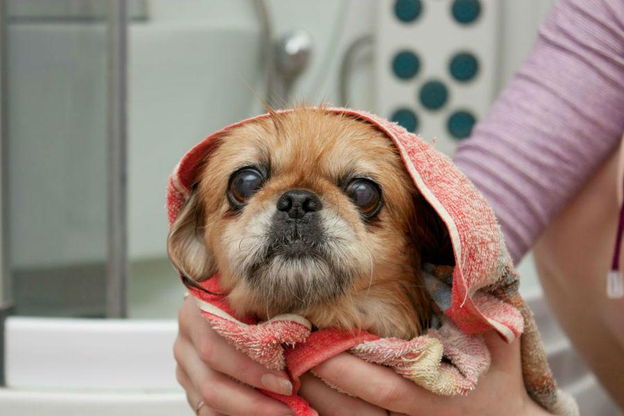 cachorros-pequines-cuidados