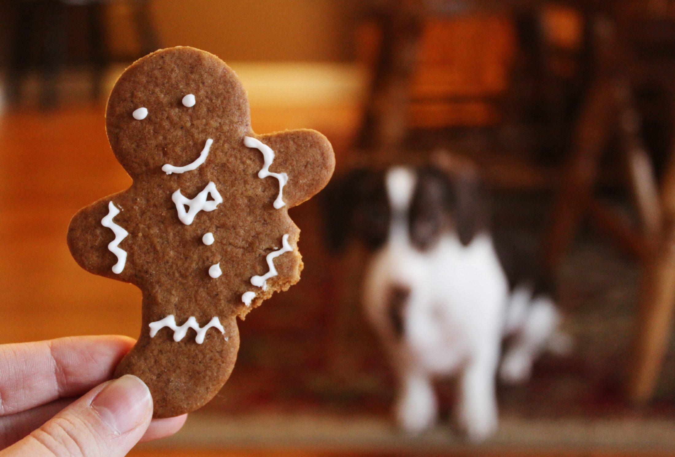 pessoa mostrando biscoito comopetisco para cachorro