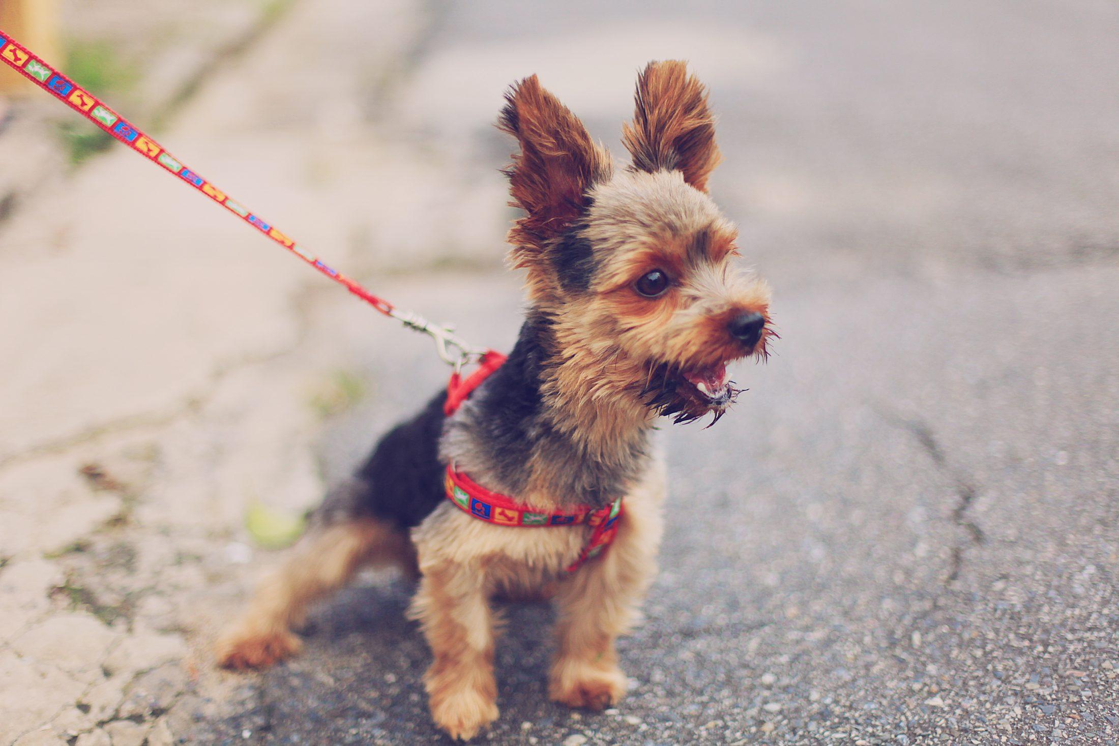 A forma mais fácil de identificar o seu cachorro é com a placa de identificação animal