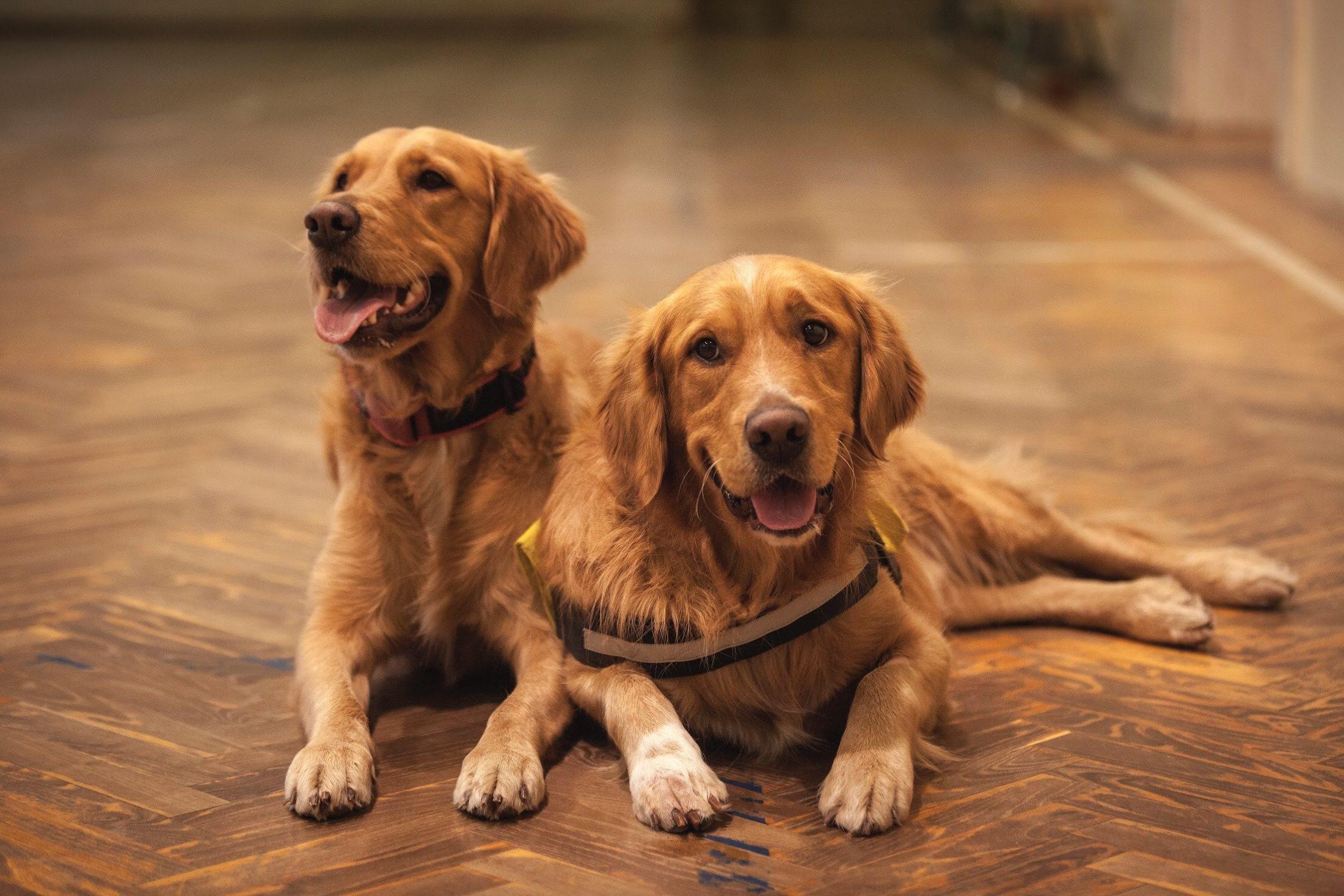 Além da placa de identificação animal, há outras formas eficientes de identificar o seu cachorro.