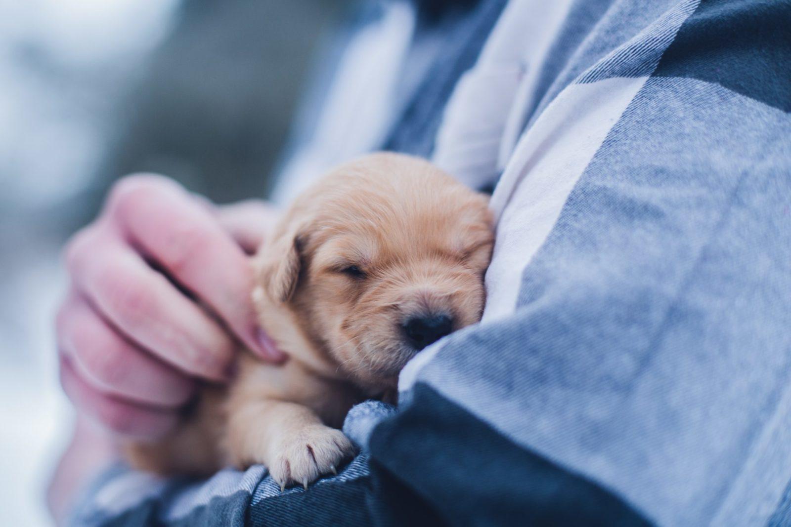 filhote com plano de saúde de cachorro no colo do vet