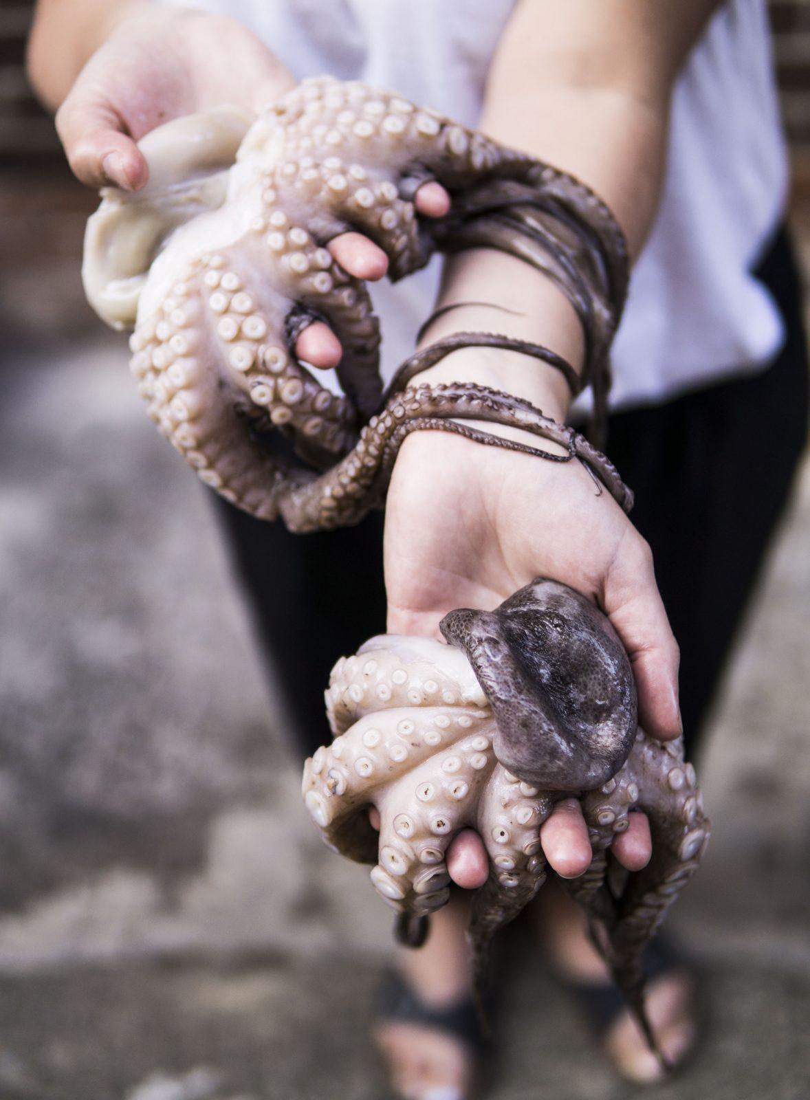 O polvo é um animal marinho, molusco, que possúi vários tentáculos com ventosas.