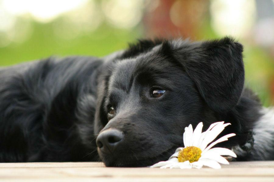 popularidade-cachorros