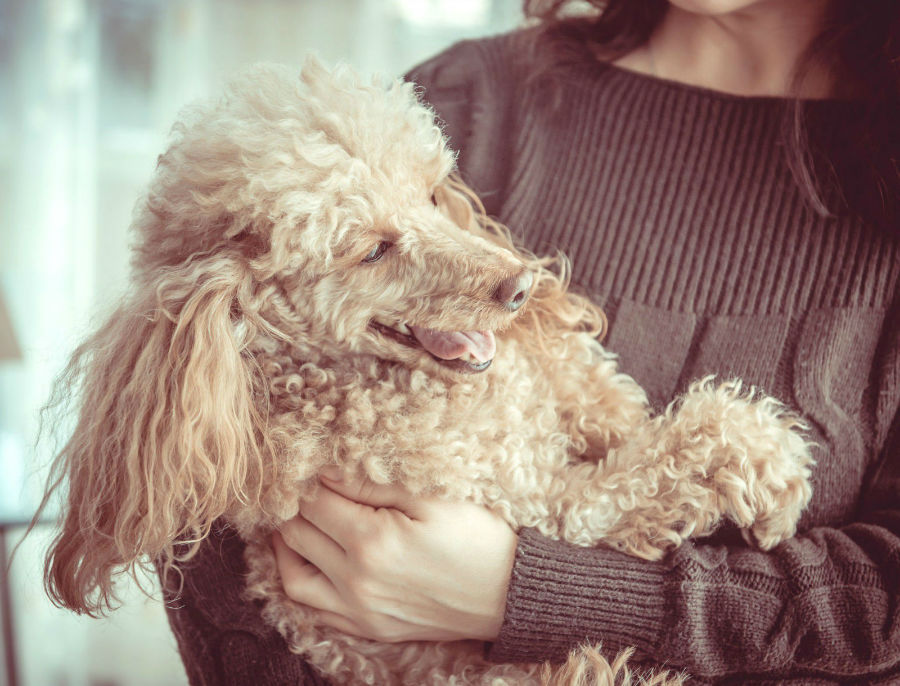 popularidade-cachorros5