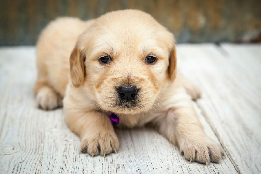 popularidade-cachorros6