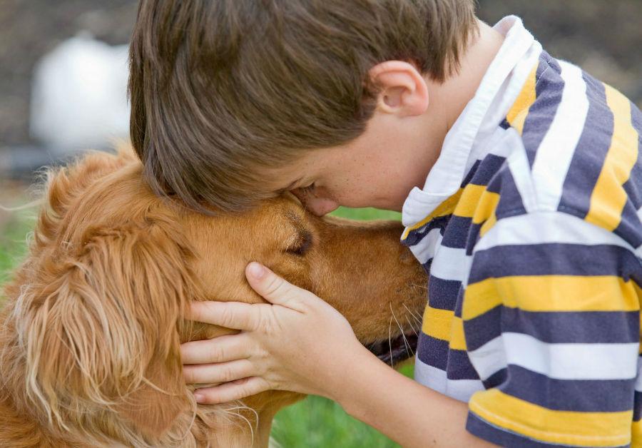 popularidade-cachorros9