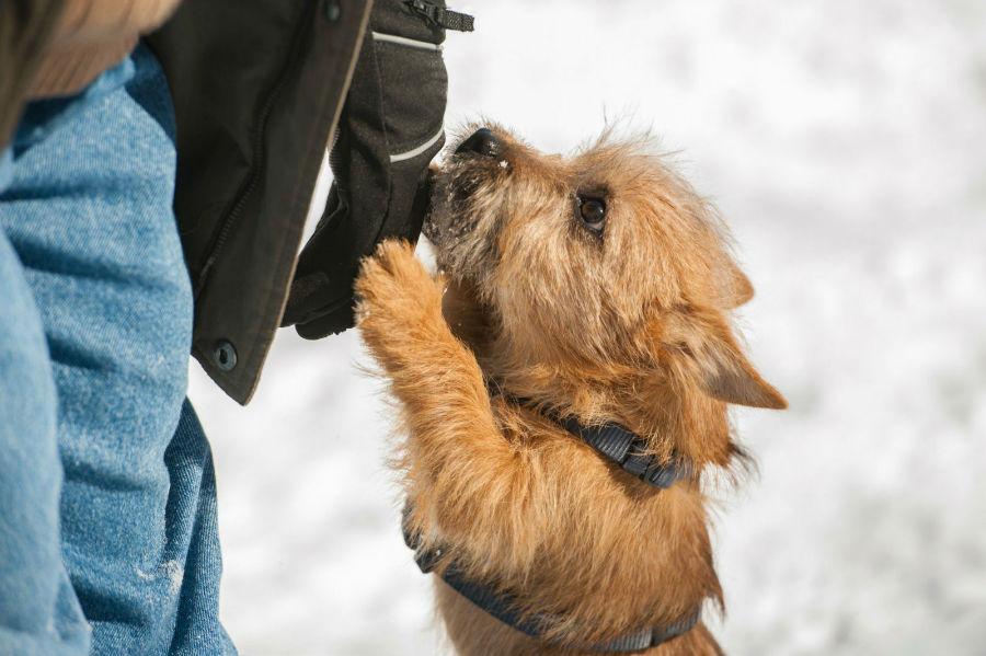 problema-comportamento-cachorro-pular