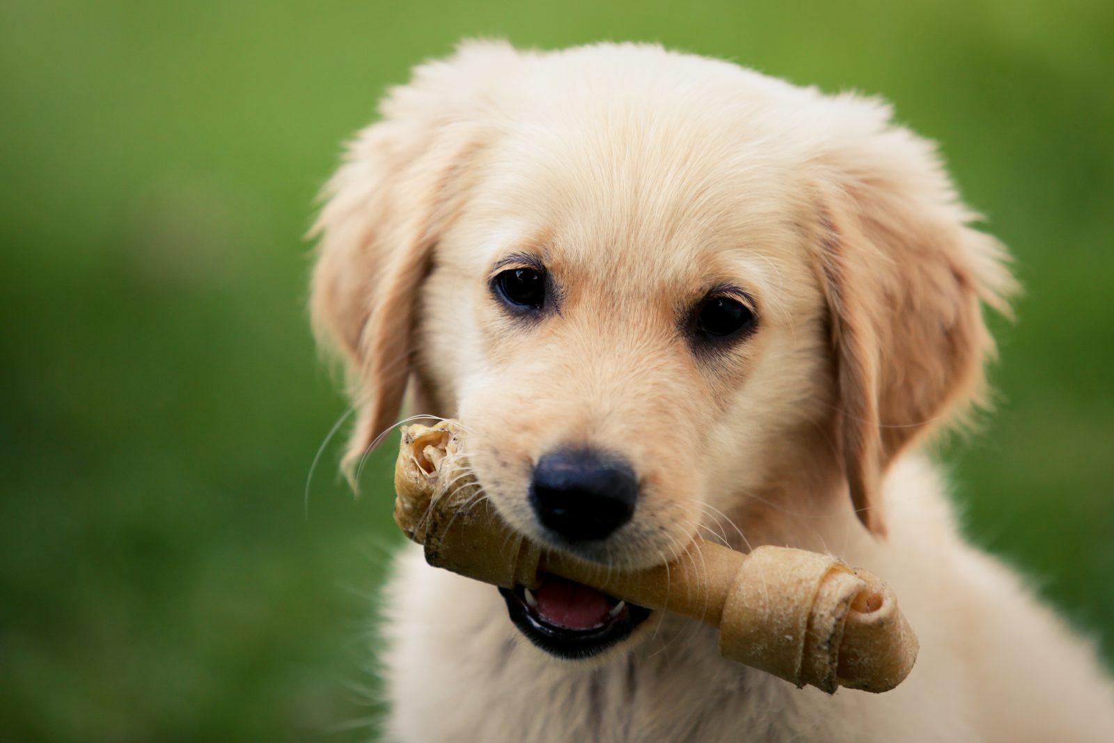 Outros produtos para cachorro visam o seu conforto.