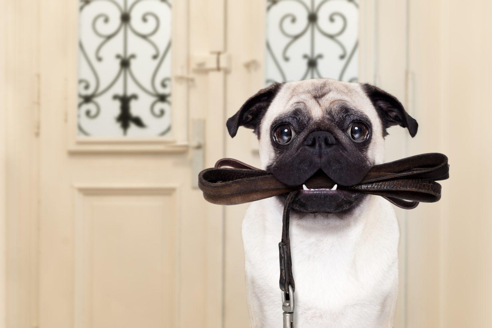 Muitos produtos para cachorros visam o bem estar físico e emocional do animal.