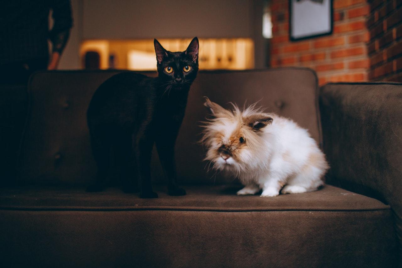 gato e coelho em cima do sofá lado a lado
