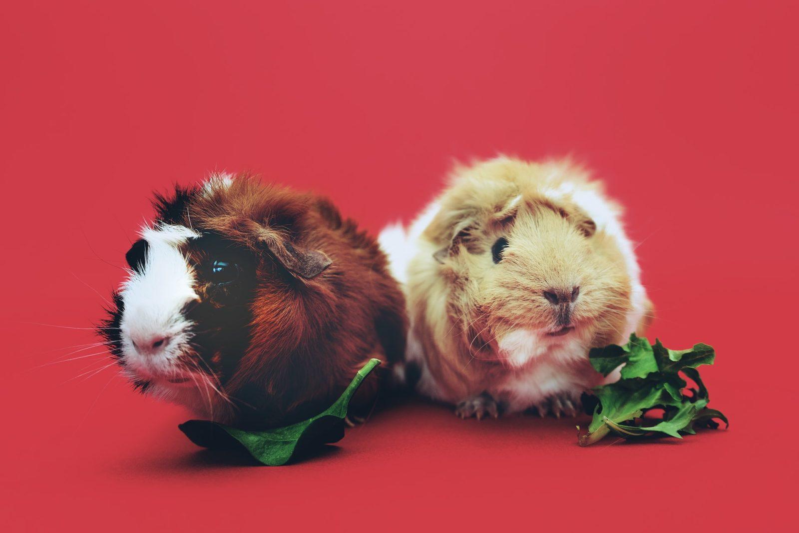 Outros pets também possuem custos diferentes de um cão e gato.