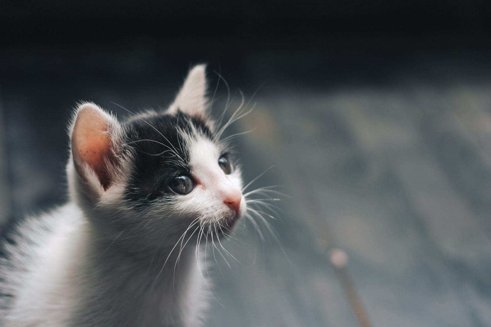 Como identificar quantos anos vive um gato não é fácil.