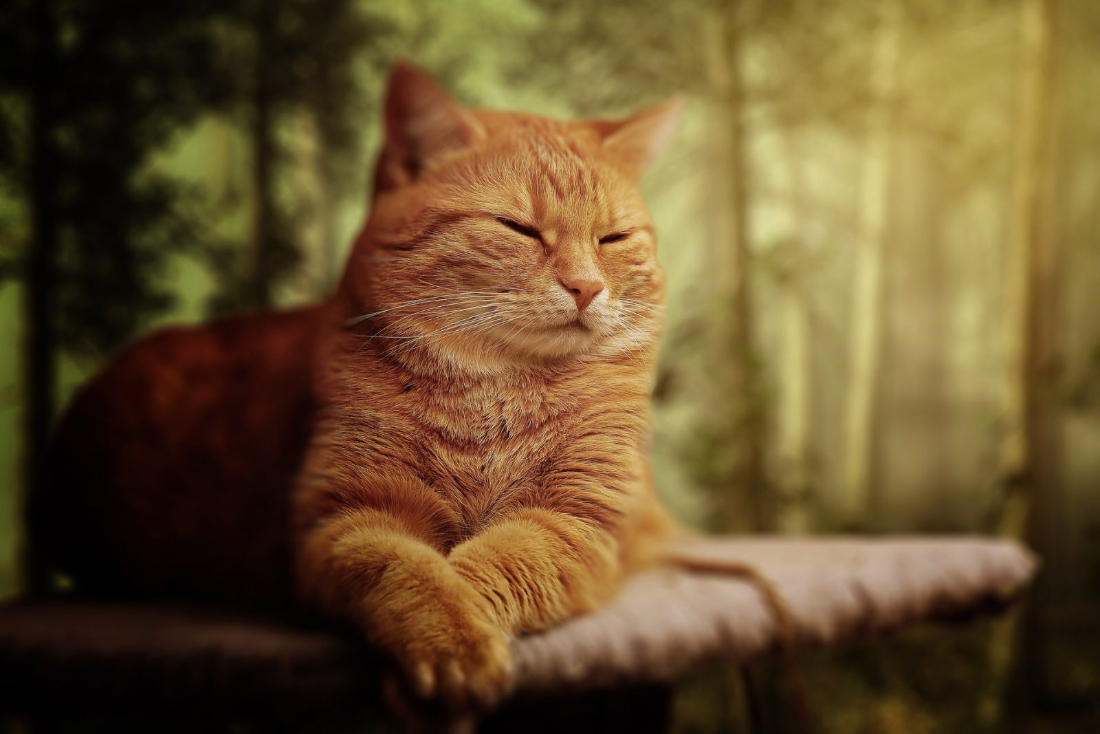 Quantos anos vive um gato: existem raças de maior longevidade.