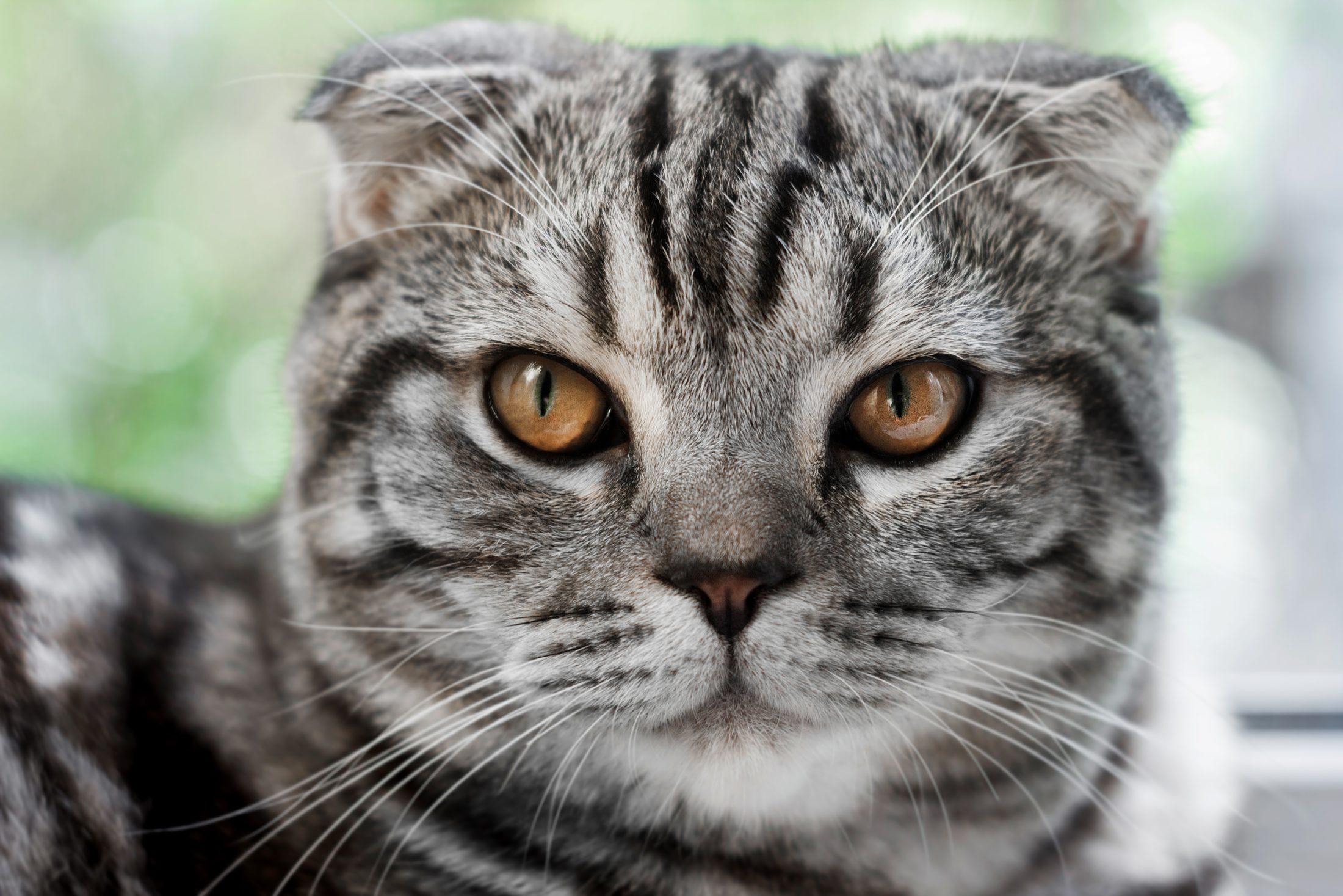 Existem vários tipos de ração para gatos castrados.