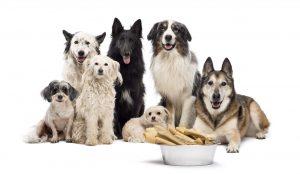 Ração para cachorro: vários cachorros de raças diferentes juntos em frente à um pote de comida para cachorro.