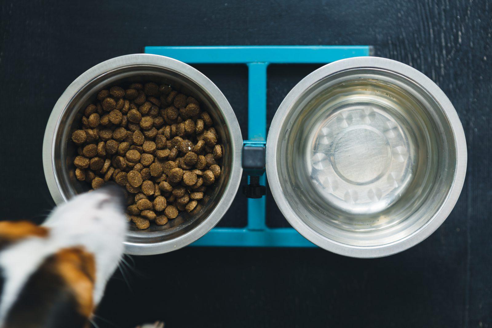 Ração para cachorro: cachorro adulto se alimentando de ração seca.