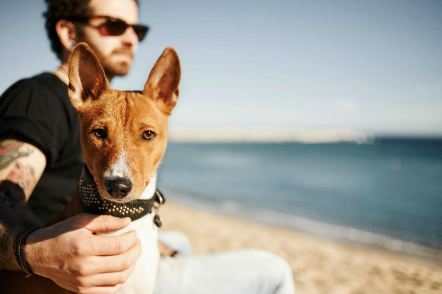 Raças de cachorro hipoalergênicas: homem com basenji na praia