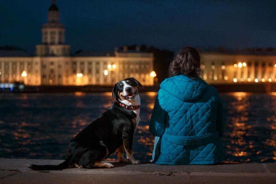 racas-visadas-cachorro-passeio-noturno