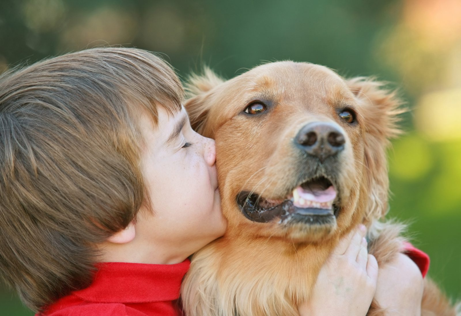 razoes-adotar-cachorro-mais-velho-heroi