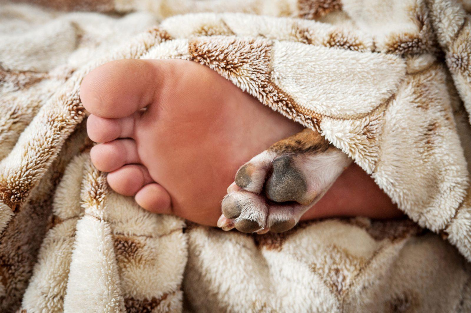 Dormir com cachorro: pessoa deitada na cama com cachorro mostrando os pés e as patas debaixo do cobertor.