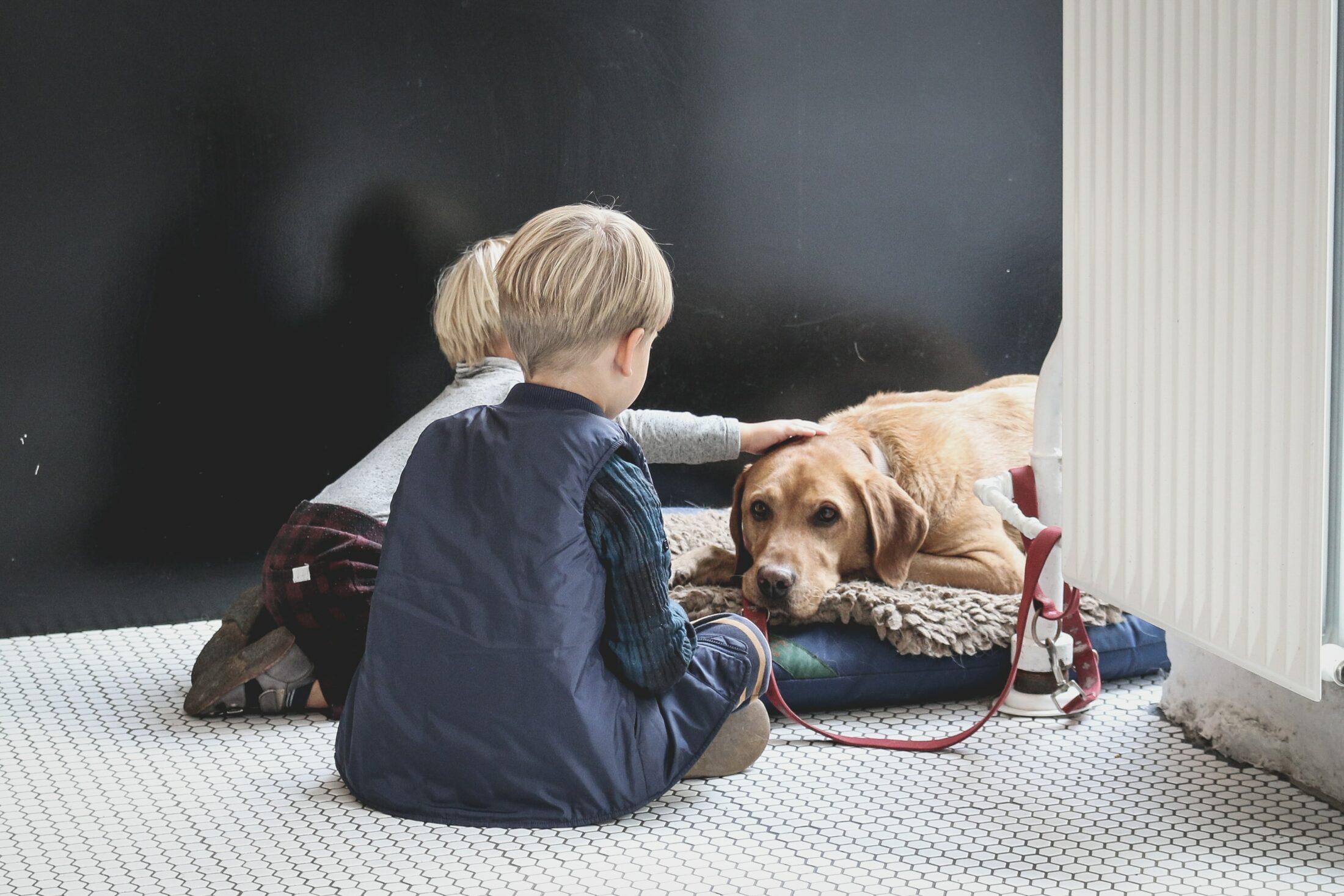responsabilidade pet