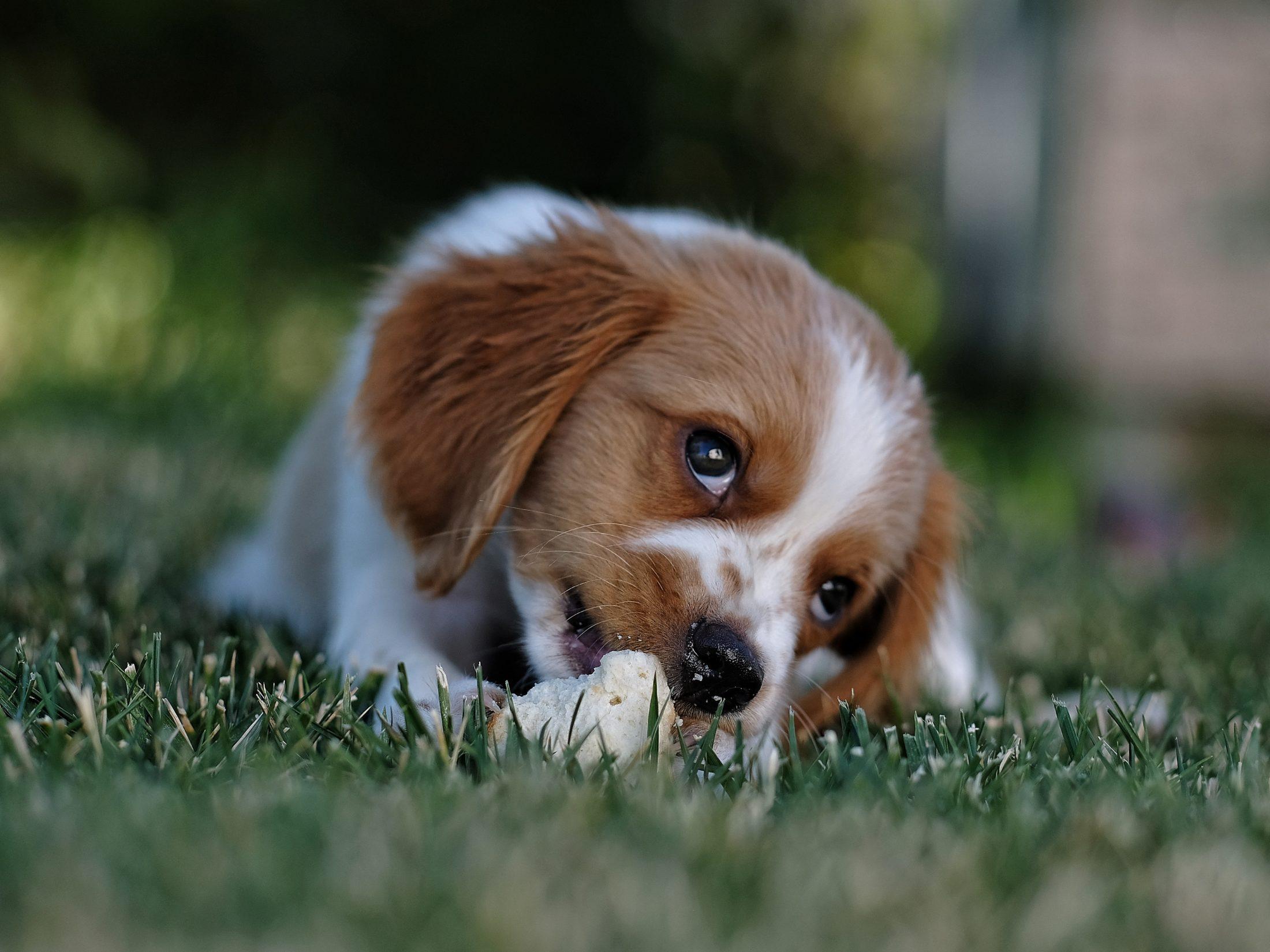Em caso de roubo de cachorro, vá imediatamente à delegacia de polícia