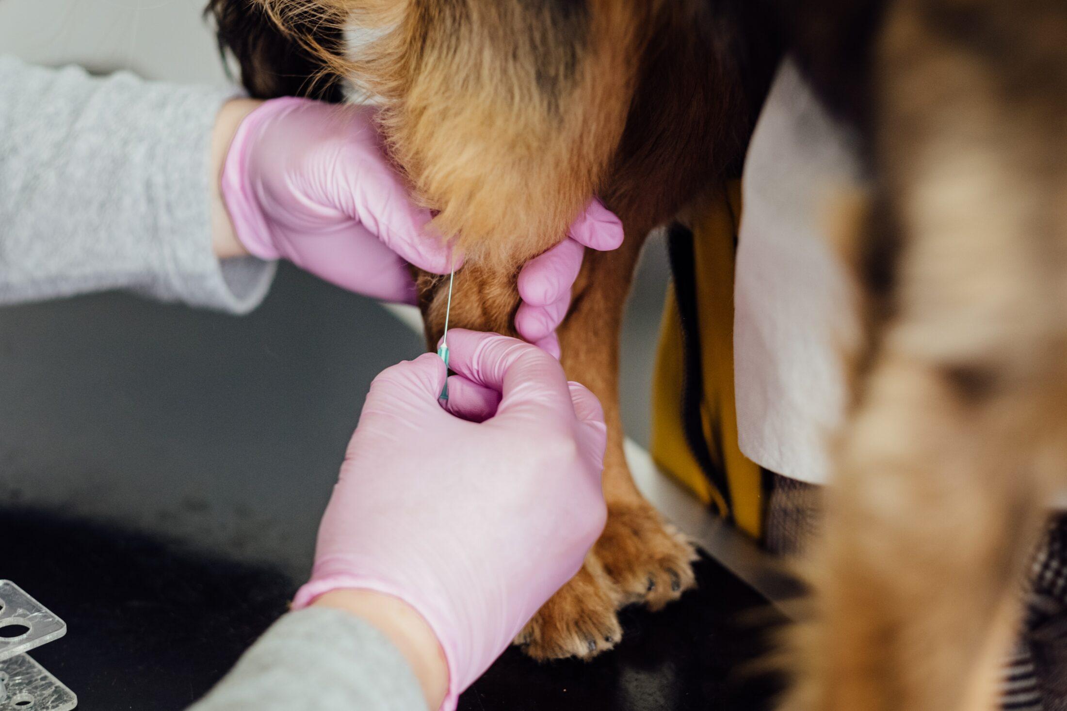 cachorro com seguro saúde pet sendo tratado pelo veterinário