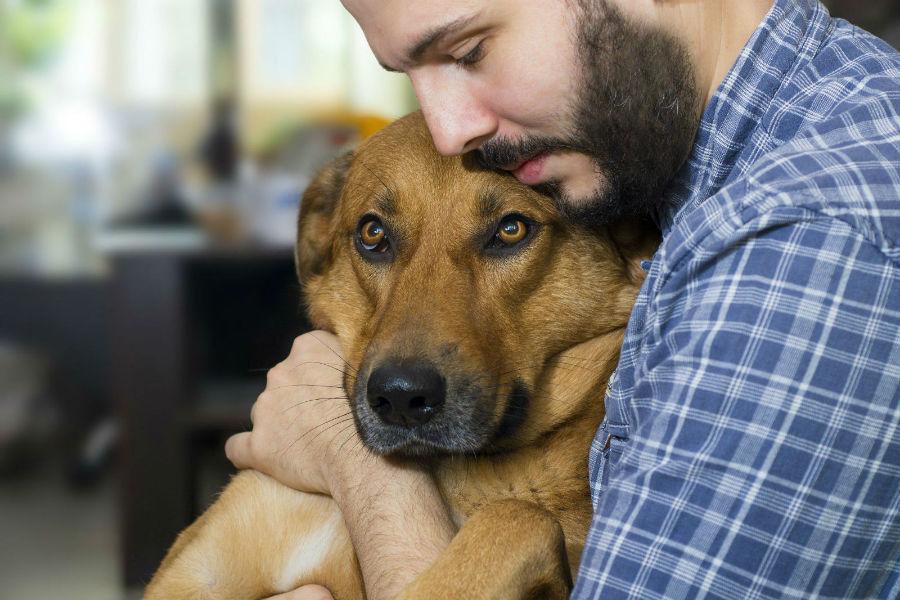 Cachorro idoso: Dono sendo amável com sue velho amigo já velhinho