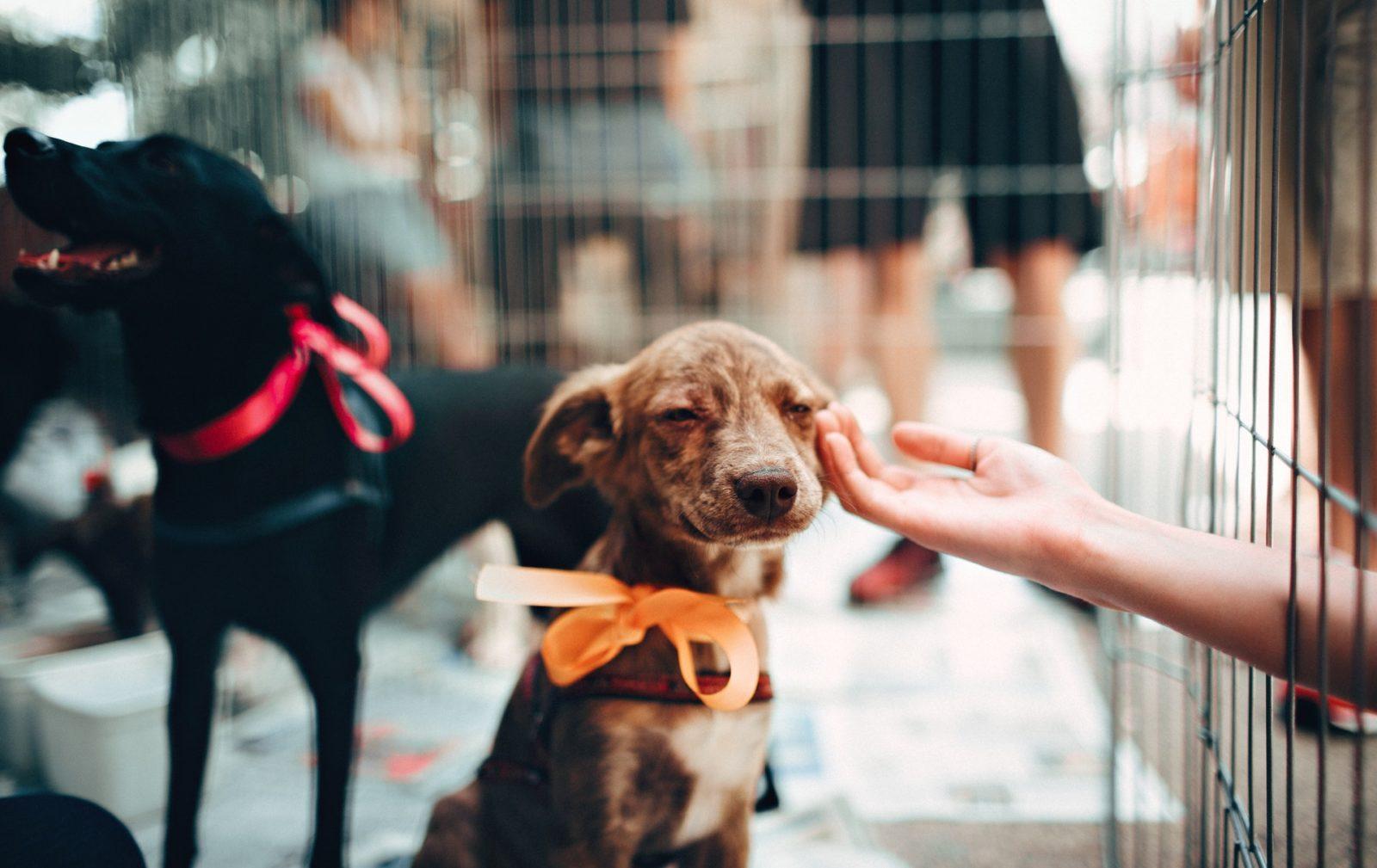 cachorro para adotar em sites de adoção