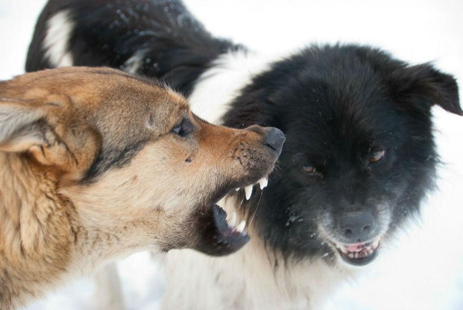 sonhar-cachorro-brigando
