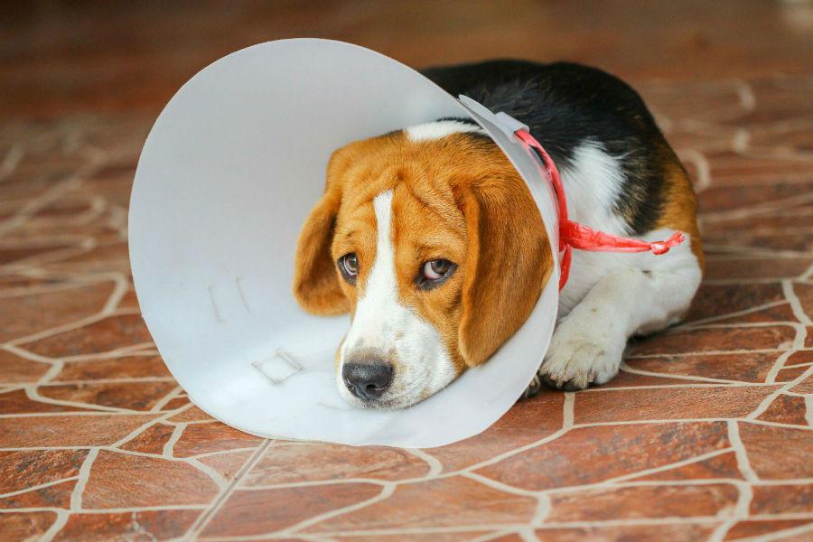 sonhar-cachorro-sofrendo