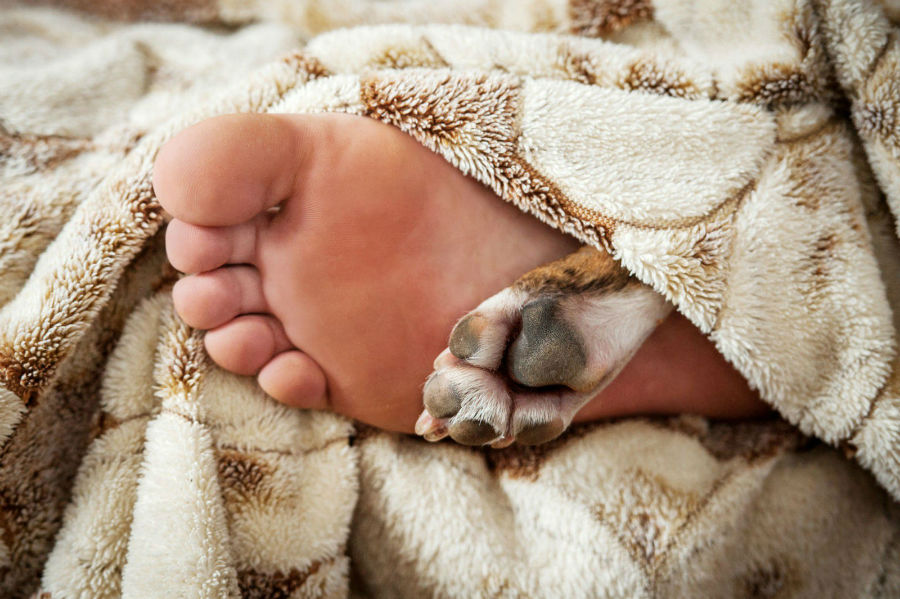 sonhar-cachorro