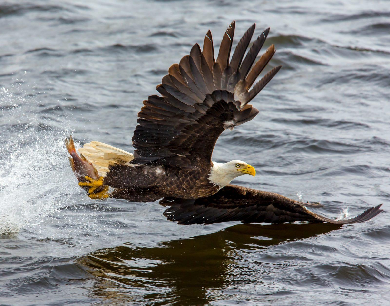 Sonhar com águia morta por você significa superação de obstáculos.