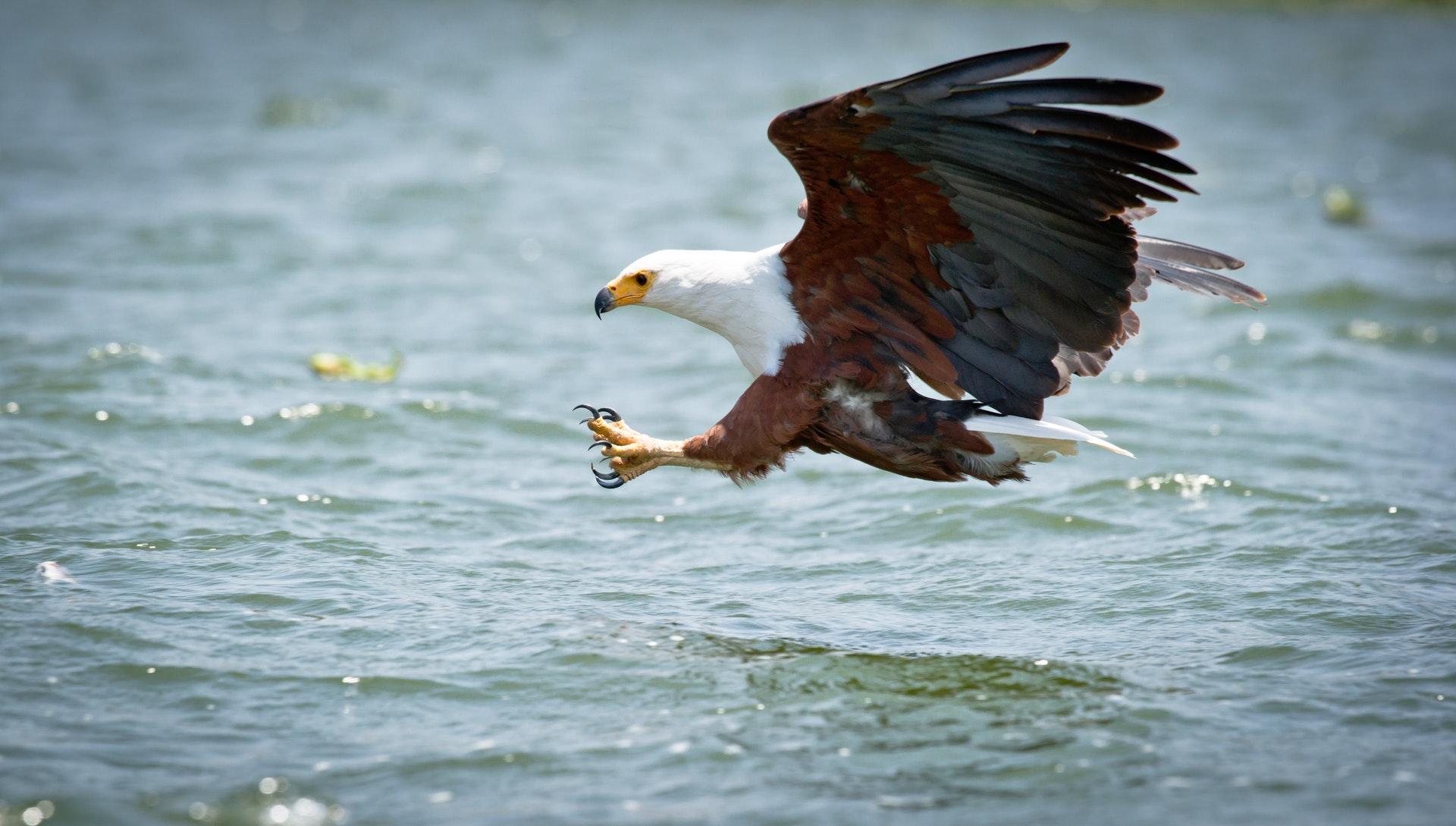 Sonhar com águia gigante significa insegurança.
