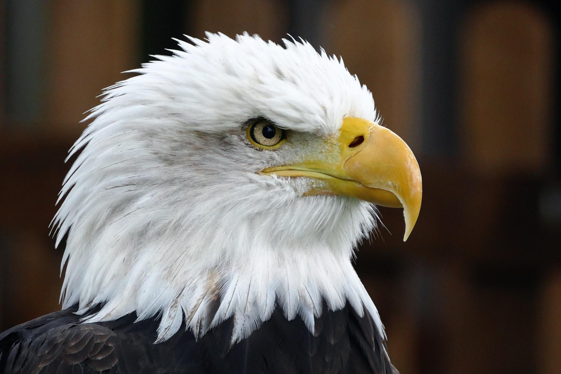 تحميل فيلم the eagle