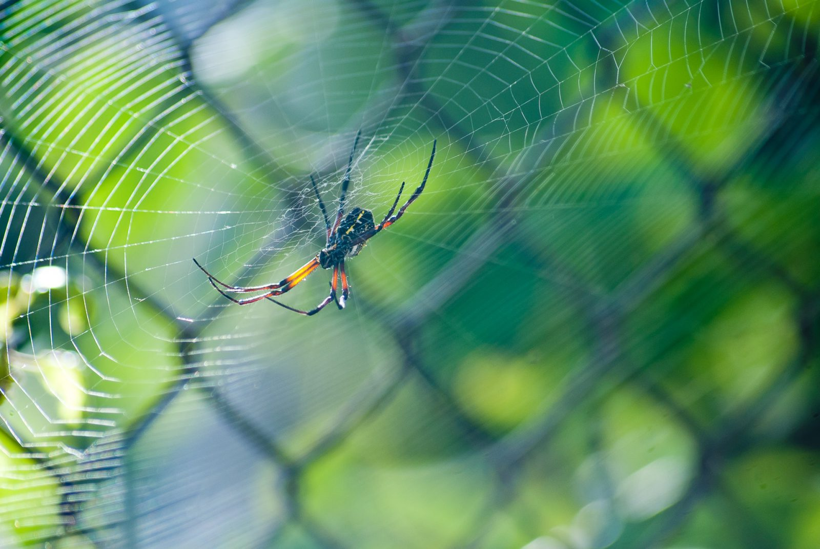 Sonhar com teia de aranhas significa uma série de coisas como criação, destino, responsabilidades, armadilhas.