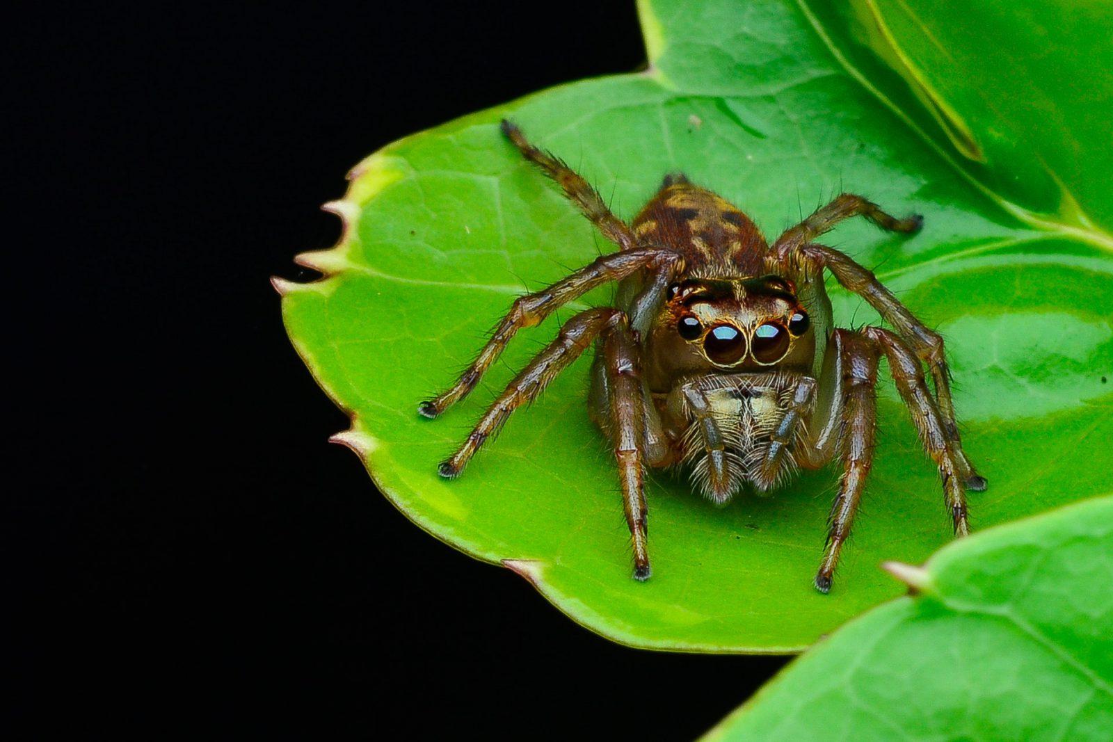 Sonhar com aranha marrom simboliza estresse.