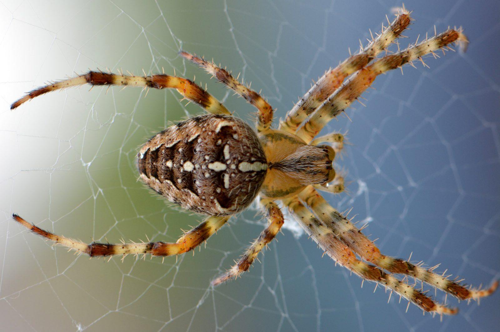 Sonhar com aranha está ligado à ansiedade.