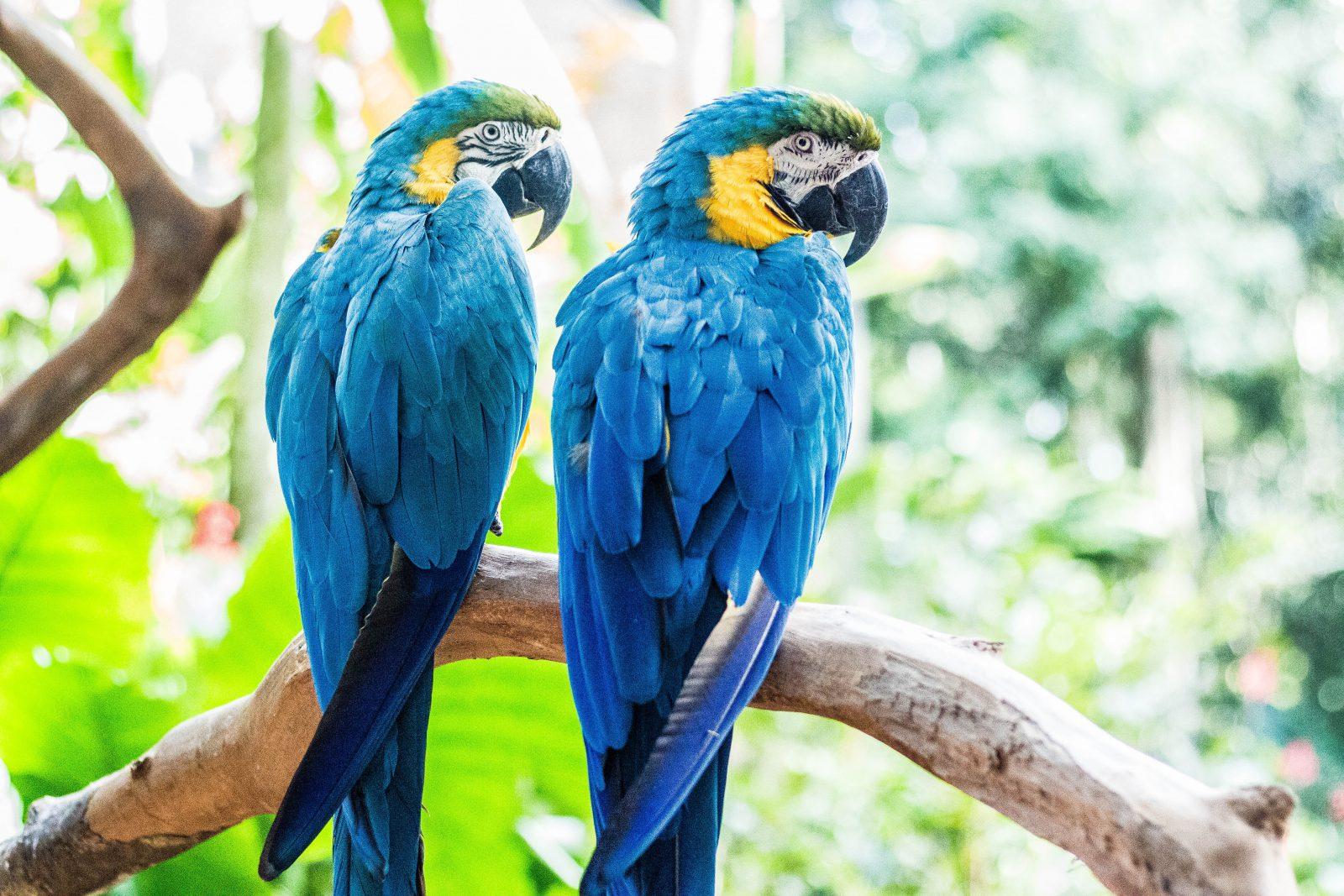 Sonhar com Arara Azul é sinal de momentos felizes a caminho.